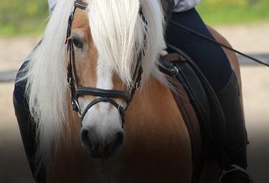 equitacion